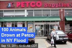 100 Animals Drown at Petco in NY Flood