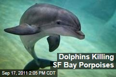 Bottlenose Dolphins Killing Porpoises in San Francisco Bay