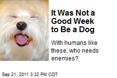 It Was Not a Good Week to Be a Dog