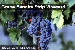 Grape Bandits Strip Vineyard
