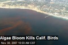 Algae Bloom Kills Calif. Birds