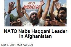 NATO Nabs Haqqani Leader in Afghanistan