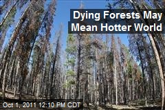 Dying Forests May Mean Hotter World