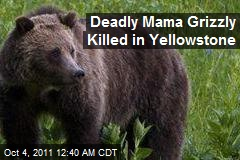 Deadly Yellowstone Mama Grizzly Killed