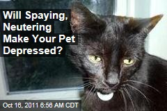 Spaying, Neutering May Make Your Cat Depressed