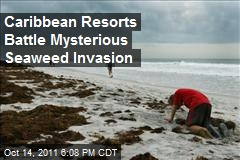 Caribbean Resorts Battle Mysterious Seaweed Invasion