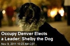 Occupy Denver Elects a Leader: Shelby the Dog