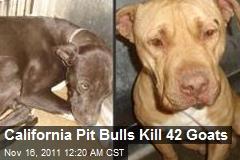 Calif. Pit Bulls Slaughter 42 Goats