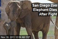 San Diego Zoo Elephant Dies After Fight