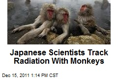 Japanese Scientists Track Radiation With Monkeys