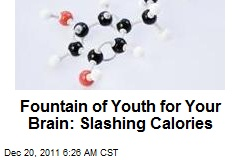 Fountain of Youth for Your Brain: Slashing Calories