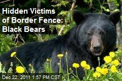 Hidden Victims of Border Fence: Black Bears