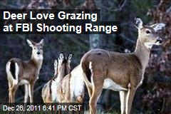 Deer Love Grazing at FBI Academy in Quantico, Virginia