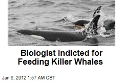 Marine Biologist Nancy Black Indicted for Feeding Killer Whales