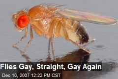 Flies Gay, Straight, Gay Again