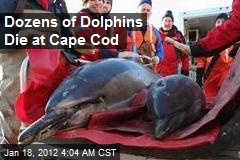 Dozens of Dolphins Die at Cape Cod