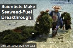 Scientists Make Seaweed-Fuel Breakthrough