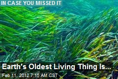 Earth's Oldest Living Thing Is...