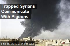 Trapped Syrians Communicate With Pigeons