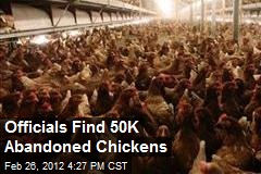 Officials Find 50K Abandoned Chickens