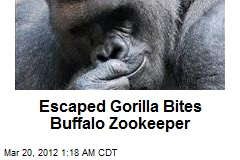 Escaped Gorilla Bites Buffalo Zookeeper