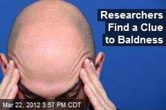 Researchers Find a Clue to Baldness