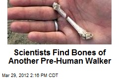 Scientists Find Bones of Another Pre-Human Walker