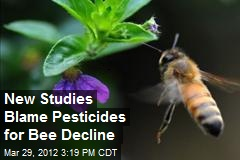 New Studies Blame Pesticides for Bee Decline