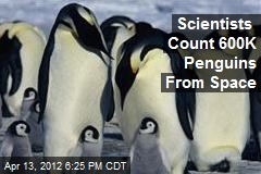 Scientists Count 600K Penguins From Space