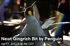 Newt Gingrich Bit by Penguin