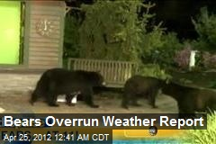 Bears Overrun Weather Report