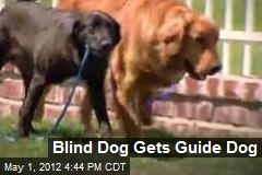 Blind Dog Gets Guide Dog