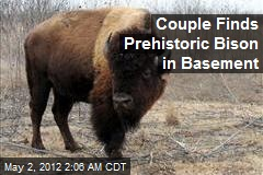 Couple Finds Prehistoric Bison in Basement