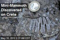 Mini-Mammoth Discovered on Crete