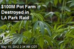 $100M Pot Farm Destroyed in LA Park Raid