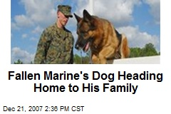 Fallen Marine's Dog Heading Home to His Family