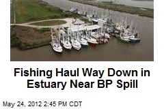 Fishing Haul Way Down in Estuary Near BP Spill