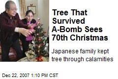 Tree That Survived A-Bomb Sees 70th Christmas