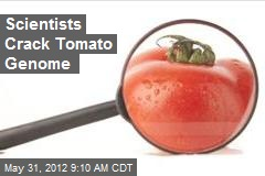 Scientists Crack Tomato Genome