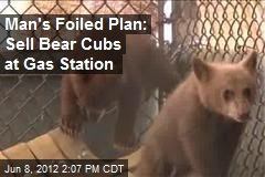 Man's Foiled Plan: Sell Bear Cubs at Gas Station