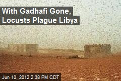 With Gadhafi Gone, Locusts Plague Libya