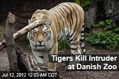 Tigers Kill Intruder at Danish Zoo