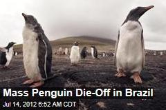 Mass Penguin Die-Off in Brazil