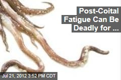 Sex Romps Leave Squid Dangerously Fatigued