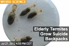 Elderly Termites Grow Suicide Backpacks