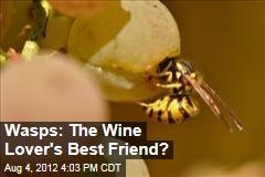 Wasps: The Wine Lover's Best Friend?
