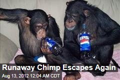 Runaway Chimp Escapes Again