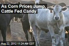 As Corn Prices Jump, Cattle Fed Candy