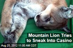 Mountain Lion Tries to Sneak Into Casino