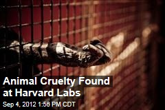 Animal Cruelty Found at Harvard Labs